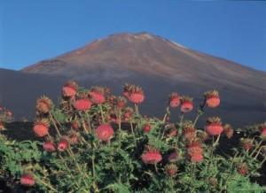 富士山 御殿場 夏(観光協会)